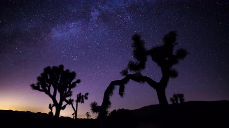 droga : Joshua Trees and Milky Way Timelapse during Perseid Meteor Shower Wideo