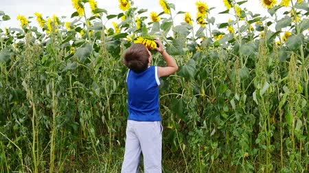 smell : A child smells a sunflower