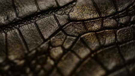 yılan : Crocodile skin Stok Video