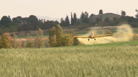 cultivo : Agriculture Aircraft ( crop duster ) with sound. Yellow crop duster ( agricultural aircraft ) flies low over a field with wheat and splashing, sprays chemicals against pests . Shooting from behind. ( Tripod) CU