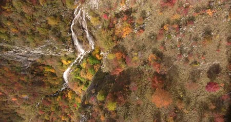 autumns : Footage of an unspoiled nature, autumns season and it´s colorful trees with a waterfall... Stock Footage