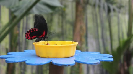 flying ants : Red and black butterfly on a flower-shaped manger Stock Footage