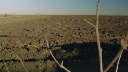 irrigate : Rack focus from a branch to vast farm field.