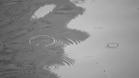 repousante : Rain drops ripple on water in slow motion.