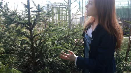 A young woman chooses a Christmas tree for Christmas and New year. Wideo