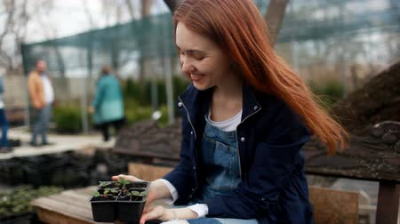 żonkile : A young woman chooses flowers for the garden. Wideo