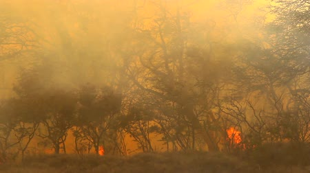 lutador : Brush Fire Stock Footage