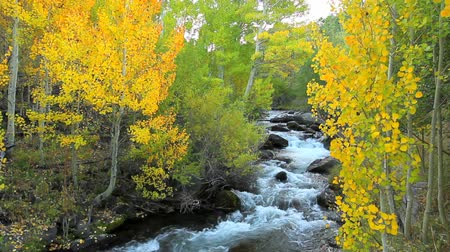 árvores : Beautiful Mountain River with Amazing Fall Colors