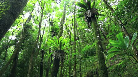 jungle : Jungle Rainforest Stock Footage