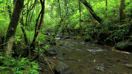 deszcz : Lush River in Jungle Wideo