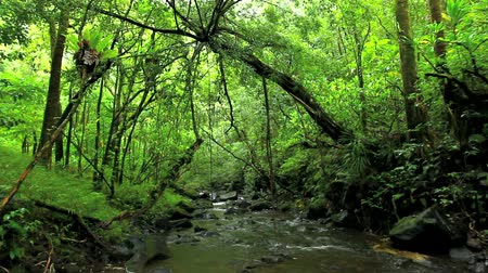 arbol : Lush río en la selva Archivo de Video