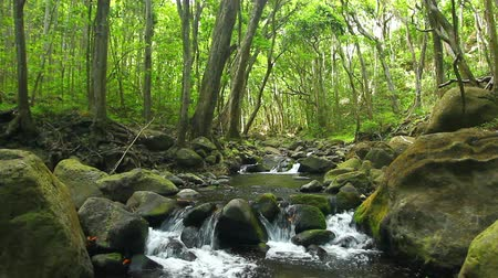 mossy forest : Lush Stream in Jungle