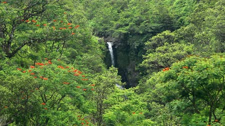 vibrující : Waterfall in Jungle