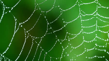 coloured background : Macro View of Spider Web