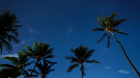 árvores : Tropical Palm Trees at Night