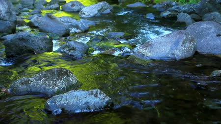 Water Flowing in Stream Wideo