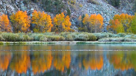 mudança : Fall Colors, Vibrant Aspen Reflecting in Lake Stock Footage