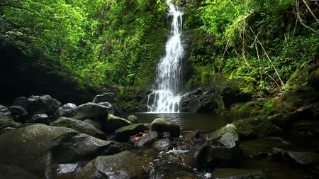 cascata : Waterfall in Jungle