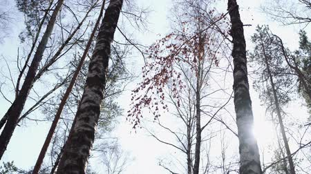 waggle : Waggling coniferous trees from below