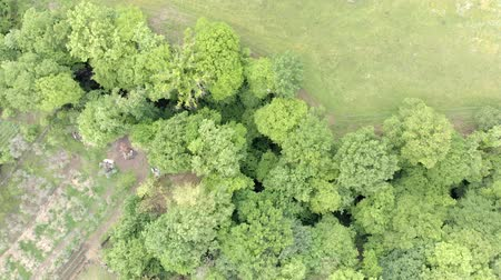 istálló : Beautiful top view of drone flies above green countryside with foliage of huge trees and green meadow