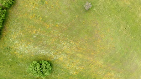 awesome : Awesome top view of drone flies above countryside with green cultivated fields and fruit trees Stock Footage