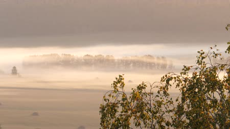 ural : Static view. Foggy sunrise. Mountain forest, field Stock Footage