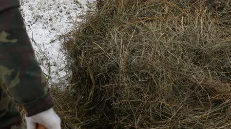 treyler : The farmer loads the hay on the trailer. Close-up