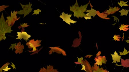 folhas : Autumn Leaves Loop - Seamless loop of autumn leaves falling. Alpha matte included.