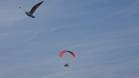летчик : Red Motorized Paraglider flying on the Sky with Seagulls. Стоковые видеозаписи
