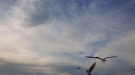 морских птиц : Seagull flying super slow motion in the cloudy blue sky.