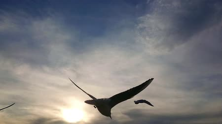 aves marinhas : Seagull in flight. Super slow motion. Blue sky and white clouds in background.