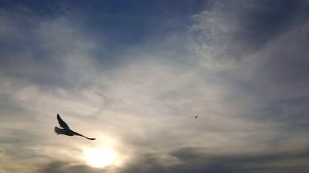 морских птиц : Seagulls flying in the sea at izmir sunset. Super slow motion. Стоковые видеозаписи