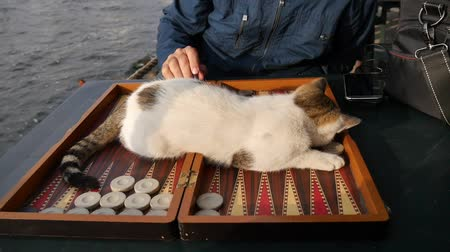 kittens playing : Sweet cat lie down on backgammon table with playing backgammon checker and dice. Stock Footage