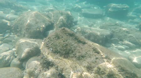 small fish swim on bottom of the Adriatic Sea Stock Footage