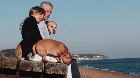 anglia : Retired Senior Couple sitting on jetty on beach with dogs