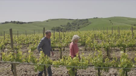 winogrona : Senior couple on holiday visiting vineyard