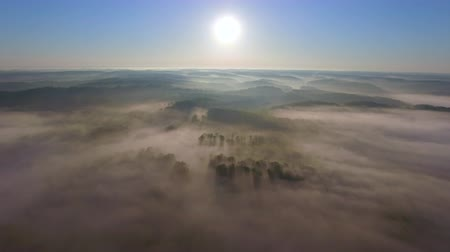 stoupat : Soaring High Over Foggy Forest at Sun Rise