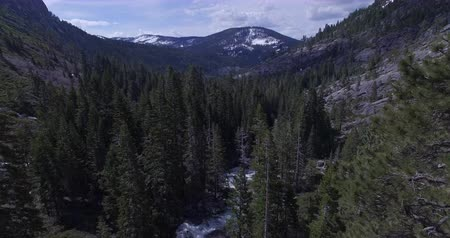 кедр : United States - Aerial view of evergreen trees and mountains