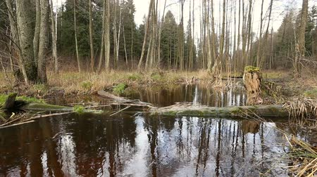 juncos : River water flow in the forest. Wetland of the pond