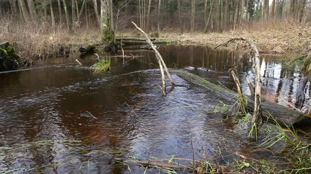 snag : River water flow in the forest. Wetland of the pond