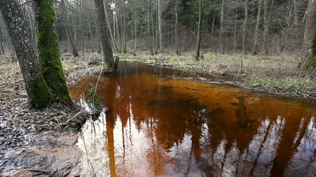 marsh : River water flow in the forest. Wetland of the pond