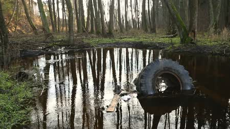 mossy : Old tyre and other garbage lies on the waterlogged river bank, environmental pollution. Abuse of environment. Stock Footage