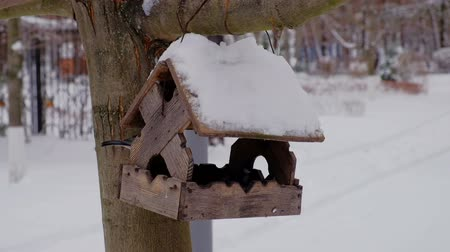 karmnik : Feeding birds at winter season with wooden bird-feeder on tree at winter Wideo
