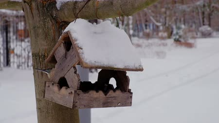 besleyici : Feeding birds at winter season with wooden bird-feeder on tree at winter Stok Video