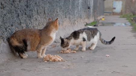 bakıyorum : Homeless Cats Eats Food on the Street of Town.