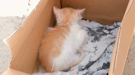 pena : Little Cute Kittens In The Box On Sale. Timid Animals Looks at People