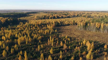tartak : Aerial view of autumn forest. Fall landscape with red, yellow and green trees. Drone video 4k