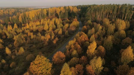 segheria : Aerial view of autumn forest. Fall landscape with red, yellow and green trees. Drone video 4k