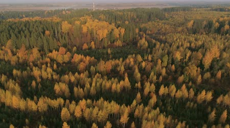フィンランド : Aerial view of autumn forest. Fall landscape with red, yellow and green trees. Drone video 4k