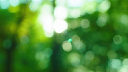 güneş ışını : Green natural sunshine bokeh defocus Stok Video